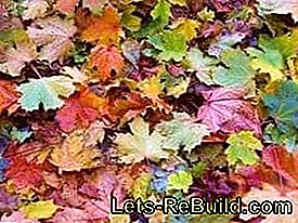 Tinker with leaves: leaves