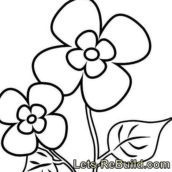 Flower Coloring: Flowers Coloring