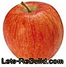 Apple Variety Overview - Description of the most popular apple species with harvest time: overview