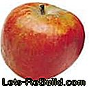 Apple Variety Overview - Description of the most popular apple species with harvest time: apple