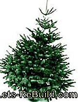 Christmas tree varieties - Which Christmas tree is the right one?: which