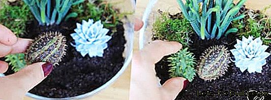 Florarium: Make mini terrarium yourself with moss, cacti and succulents: yourself