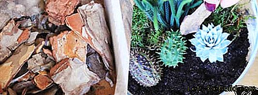 Florarium: Make mini terrarium yourself with moss, cacti and succulents: terrarium
