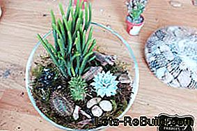 Florarium: Make mini terrarium yourself with moss, cacti and succulents: mini