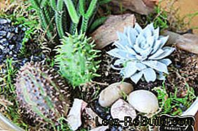 Florarium: Make mini terrarium yourself with moss, cacti and succulents: make