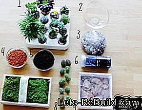 Florarium: Make mini terrarium yourself with moss, cacti and succulents: florarium