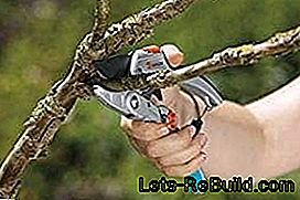 Secateurs: shears