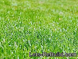 Cura del prato - Scarifying, Aerating, Sowing, Mulching, Fertilizing, Lawning and Watering: mulching