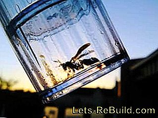 Make wasp trap yourself - remedy for wasp plague: wasp