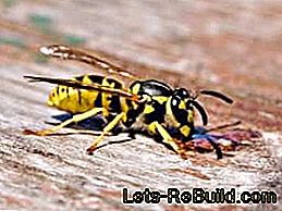 Make wasp trap yourself - remedy for wasp plague: make