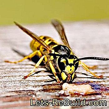 Make wasp trap yourself - remedy for wasp plague: remedy