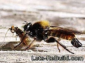 Remove wasp nest or move wasps: wasp