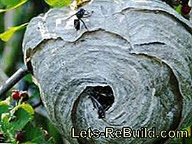 Remove wasp nest or move wasps: nest