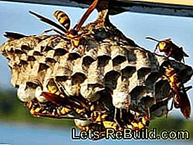 Remove wasp nest or move wasps: remove