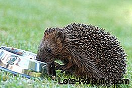 Feed hedgehogs