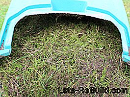 Scarifying removes moss and dead plant parts.