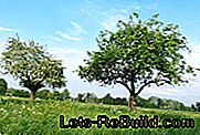 Orchard: orchard