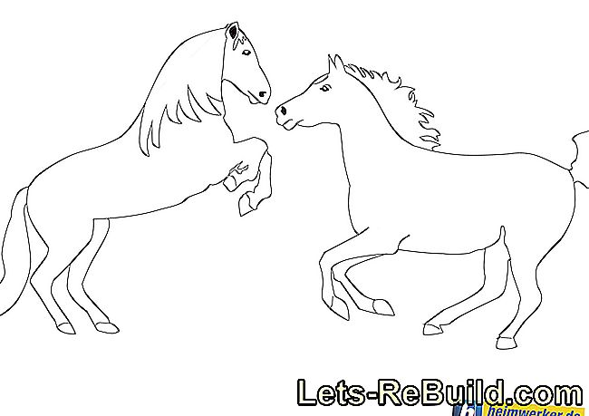 Horse Coloring: Coloring