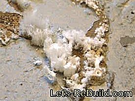 Damage - damage in the masonry - mold - salt: wall