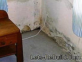 Damage - damage in the masonry - mold - salt: mold