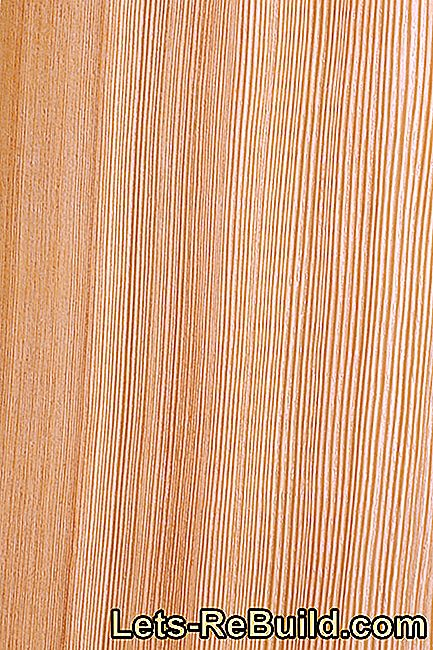 Larch wood - from the mountains or from the lowlands