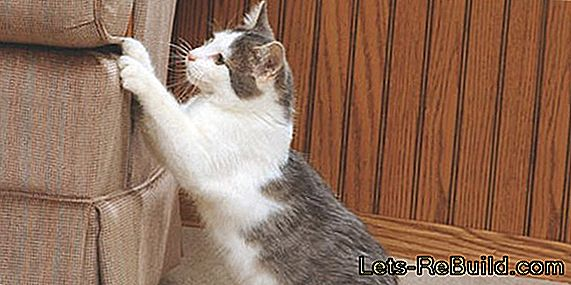 Cat scratching post - Designer furniture for cats