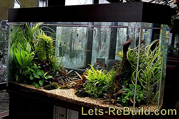 Aquarium » The Big Overview On The Topic