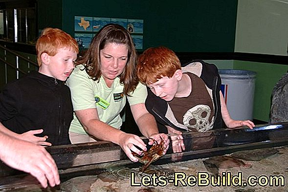 Aquarium For Children » What Makes Sense?