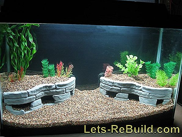 Build The Aquarium Yourself » That'S The Way It Works