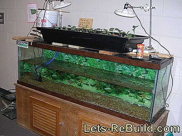 Aquarium Complete System » What Is It & What Does It Bring?
