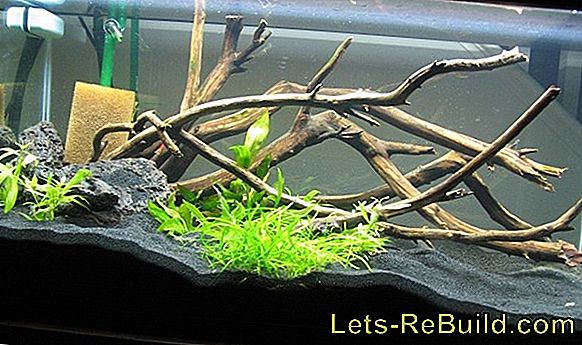 Stick The Aquarium » Instructions In 4 Steps