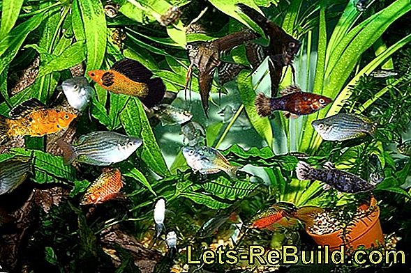 Aquarium Plants » An Overview Of The Species & Care