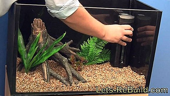 Aquarium Setup » Instructions For Beginners