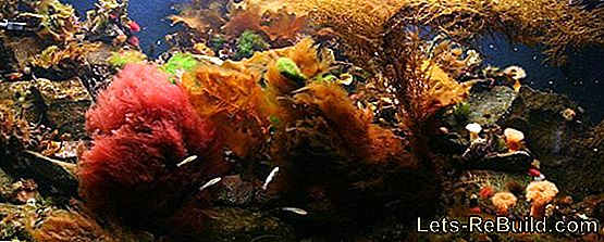 Coldwater Fish For The Aquarium » These Fish Are Suitable