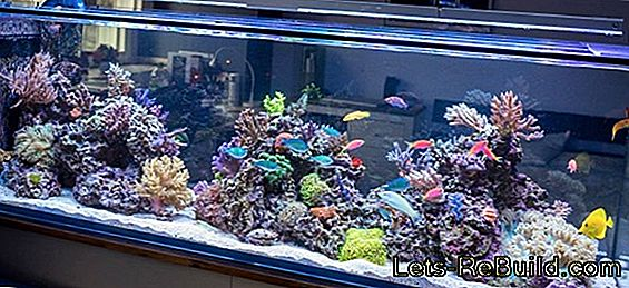 Aquarium prices - examples of complete systems