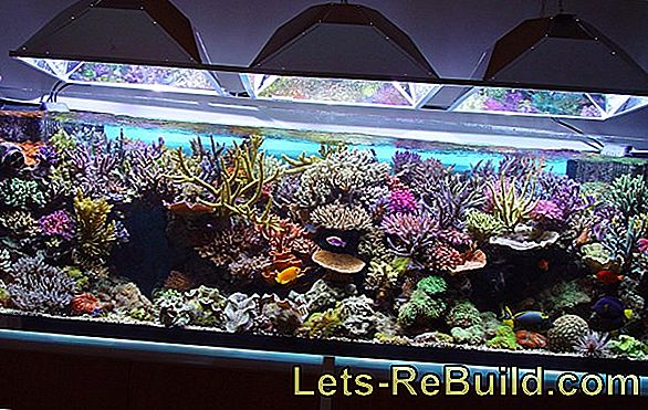 Set up a saltwater aquarium - important tips