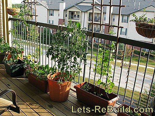 Bringing nature onto the balcony: greening the outside seat