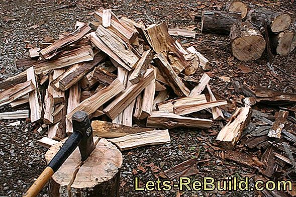 Beech Wood For The Fireplace » Features And Prices