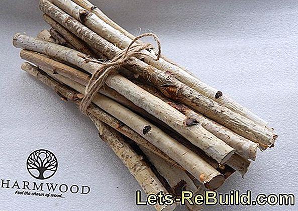 Birch wood for crafts