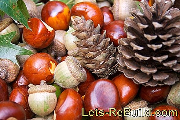 Autumn Crafts: Crafts With Chestnuts, Leaves, Pine Cones
