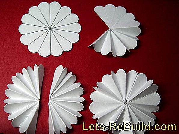 Flowers Fold Out Of Paper