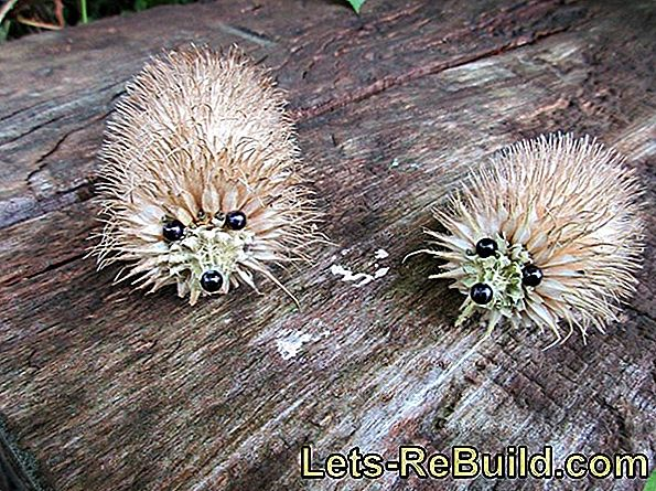 Make hedgehogs
