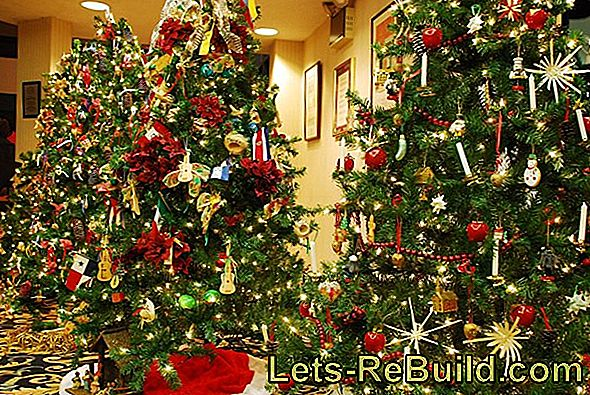 The history of the Christmas tree: Christmas tree historically