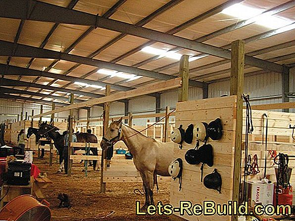 Horse stable, horse box and riding arena build yourself