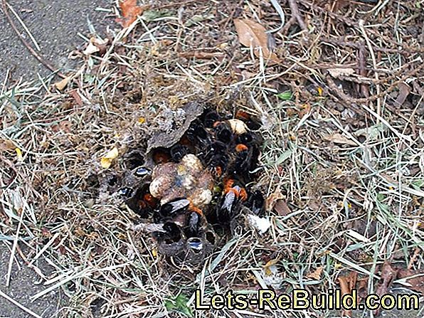 Build Kobel - Nest site for squirrels and dormice