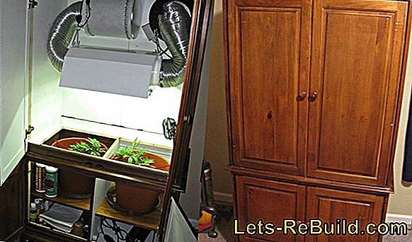 Cabinet Grow » Is This A Good Idea?