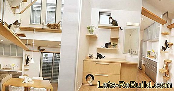 Cat Stairs Inside » 3 Creative Ideas