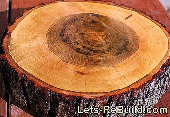 Cleaning The Chainsaw » How To Remove Resin