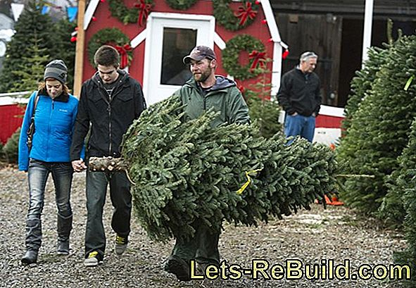 The Durability Of The Christmas Tree » This Is How It Lasts Longer