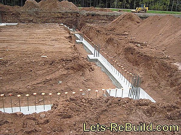 Concrete Foundation » Overview Of Different Species